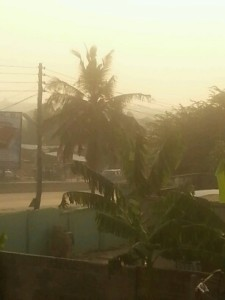 Coconut and Plantain tree in Harmattan Haze
